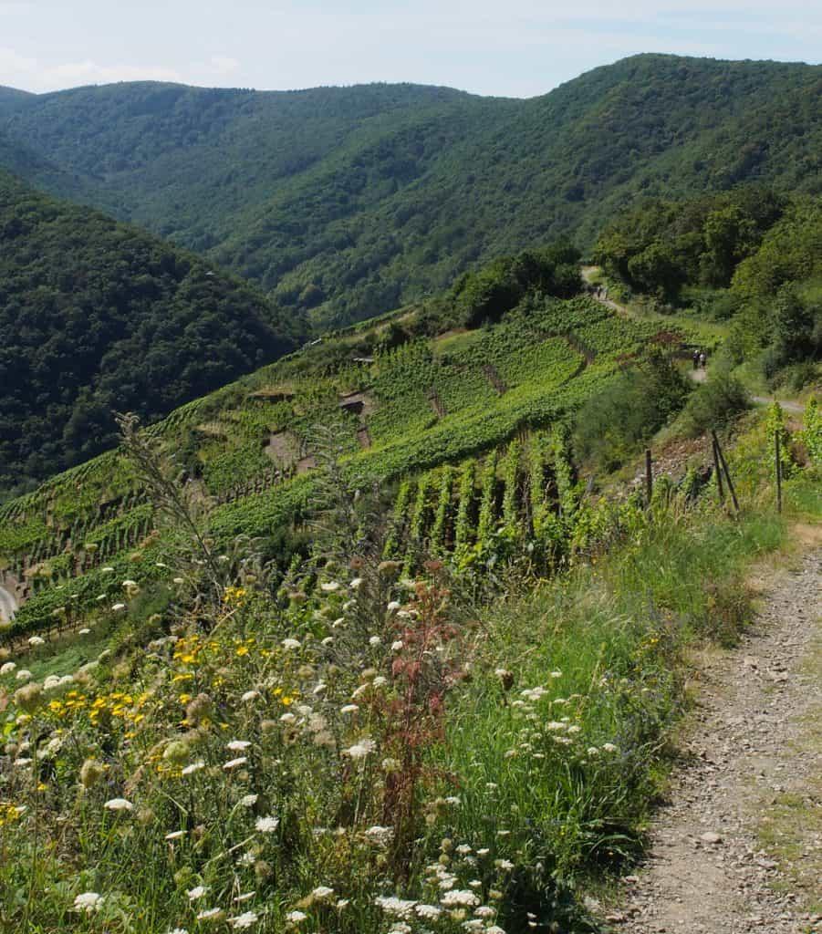 wandelen door de wijngaarden Ahr